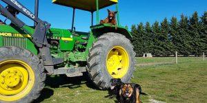 Poaka team busy out on the farm!
